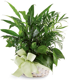 Woodland Greens Basket