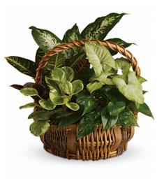 Green Garden Basket